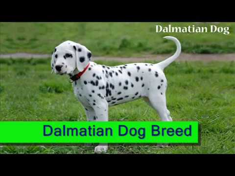 Dog Breed Types, Dog Breed Name | Top 10 Popular Dog Breeds in India | 4petneeds