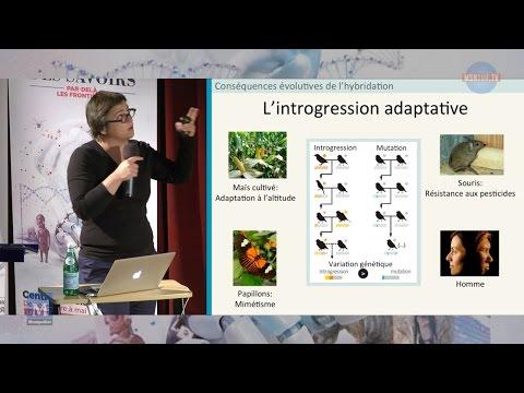 Carole Smadja - Aux frontières entre espèces : à l'origine de la diversité biologique