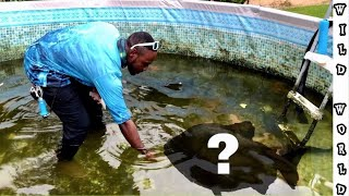 MASSIVE PET FISH  SURPRISE FOR POOL POND !