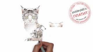 Нарисованные коты и кошки  Как нарисовать домашнего кота карандашом за 27 секунд