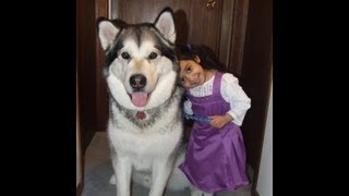 Alaskan Malamute with toddler and kids.