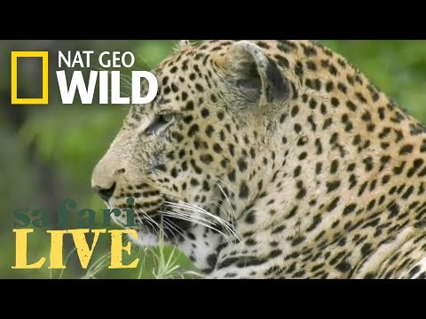 WATCH NOW: Safari Live | Nat Geo WILD