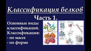Биохимия. Классификация белков. Ч.1. Система классификации.