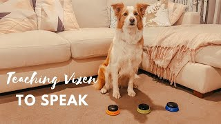 Teaching my dog to talk with recordable buzzers