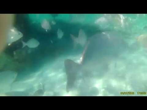 Fish Mexican Caribbean