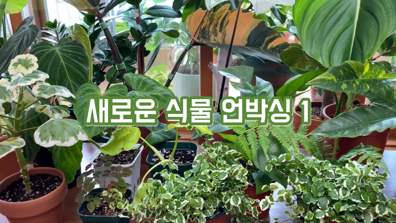 새로운 식물을 소개합니다. 식물 언박싱 1탄 13종 식물투어!!