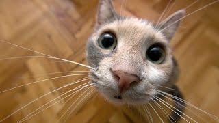 кошки мяукают очень громко в гараже!Best Funny Cats Videos Compilation | Приколы с котами
