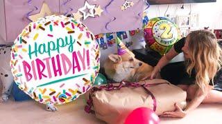 Отмечаем День Рождения собаки!=)) 2 года🐶😊