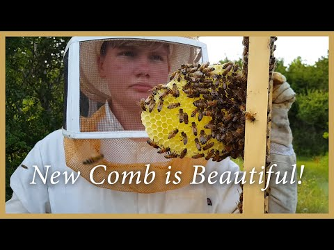 Honey Bees – Inspecting and Adding Supers – GSB S2 E5