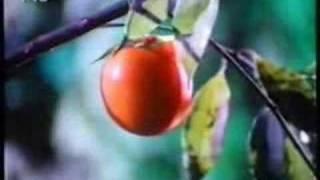 Insel der Blumen (1989) – 2/2