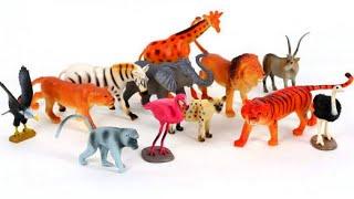 Учим животных. Сколько лет живут животные? Киндер Зу