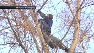 В Нижнем Новгороде так хотели спасти кошку, которая не могла спустится с дерева, что едва ее не убил