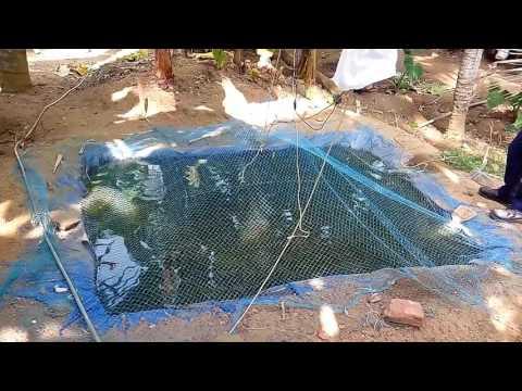 Low Cost Fish Pond(കുറഞ്ഞ ചിലവിൽ പടുതാ കുളം നിർമ്മാണം)