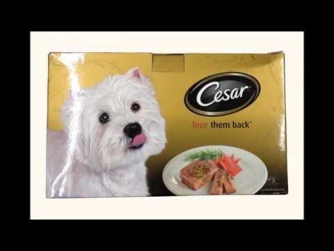 Cesar Wet Dog Food 5 Flavors