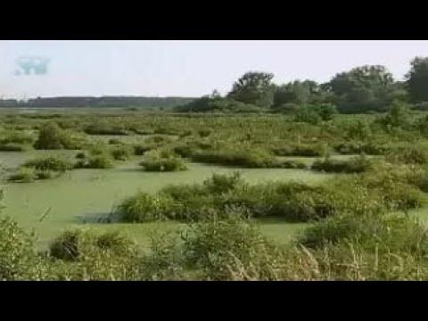 Болото. Что такое болото