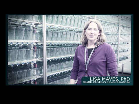 Seattle Children's Research Institute's Faces of Research – Meet Dr. Lisa Maves
