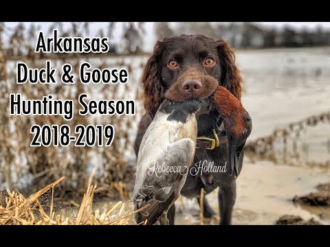 chiefholland Boykin Spaniel Duck Hunting 2018-2019