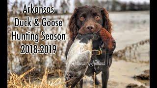 chiefholland Boykin Spaniel Duck Hunting 20182019