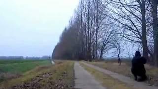 Treibjagd in Zootzen; 4 Schuss ,3 Sauen