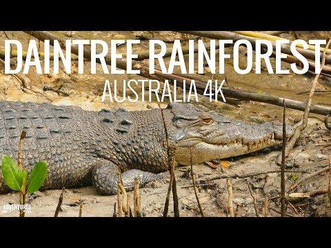 Daintree Rainforest, Crocodiles And Port Douglas Wildlife Habitat Tour In Australia 4K