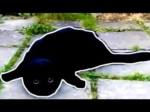 черный кот прикол