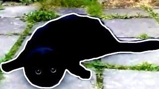 This Is Спарта - Самый черный кот в мире
