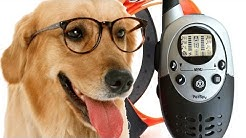 PetSpy 1100 Yard Waterproof Rechargeable Remote Training Dog Collar with Beep, Vibration