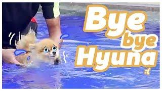 Download Video BABY EL vs HYUNA DOGGIE Wkwkwkwk MP3 3GP MP4