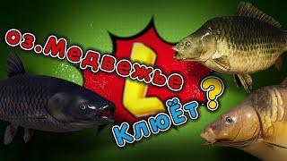 оз МЕДВЕЖЬЕ level Русская рыбалка 4