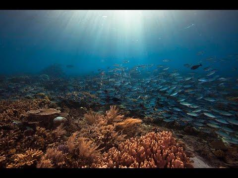 Diving in Raja Ampat, Indonesia
