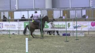 finalissima Roma cavalli mdlv 2015