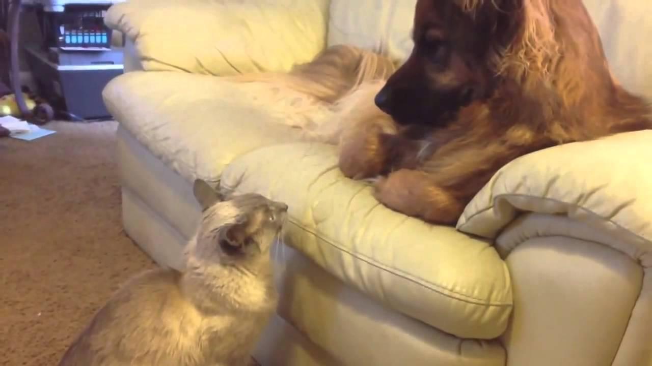 Гляделки с котом