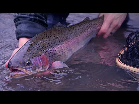 Fly Fishing For Winter Steelhead | New Years Fly Fishing