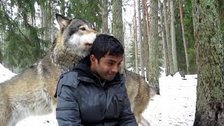 Pabasara and the Wolves 2