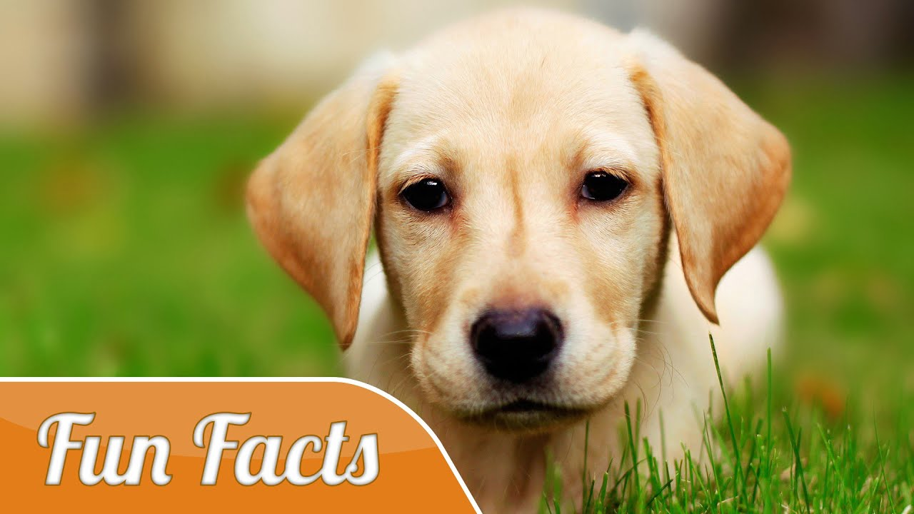 10 Fun Facts About Dogs - YouTube