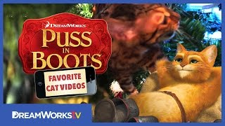 How To Wrap A Cat For Christmas | PUSS IN BOOTS FAVORITE CAT VIDEOS