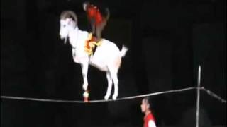 Китайский цирк это жесткая дисциплина и дрессировка!
