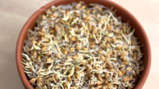 Проращивание зерна и семян - спраутер Toni