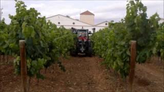 Cane trimmers /Despuntadora viña /Ecimeuses rogneuses vignes chapodadora