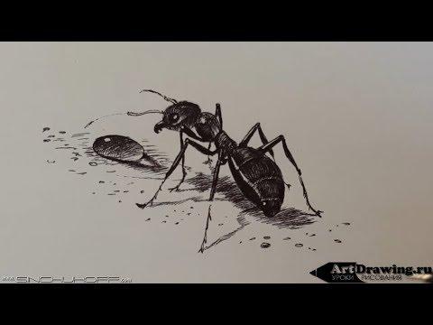 Рисуем муравья шариковой ручкой