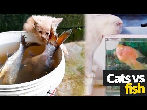 Cat vs Fish Compilation - The Ultimate Showdown