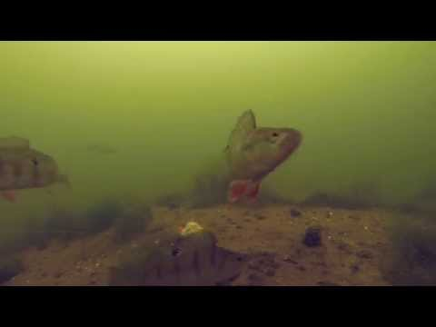 Sellfish Media Channel Trailer - Underwater Fishing