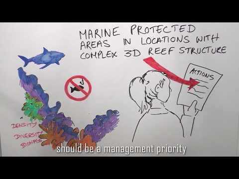 Employing 3D coral reef remote sensing to predict fish biomass | Center for Ocean Solutions