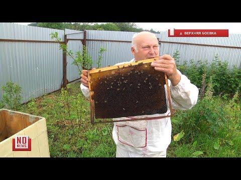 На Урале массово гибнут пчелы