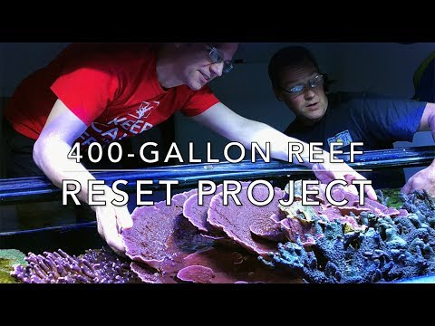 The 400g Reef Resetting Project