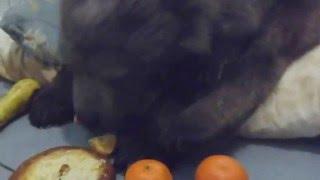 Сенечка, какой Новый год без мандаринов!!!(, 2015-12-31T17:37:22.000Z)