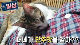 [일상] 단추에 미친 고양이 (feat.호두)