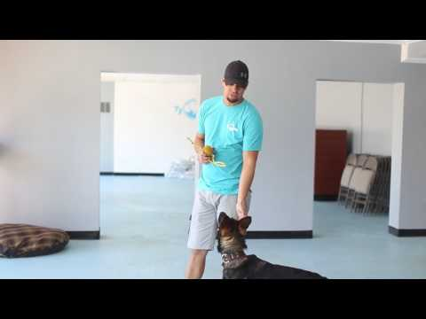 Using High Value Rewards to Speed Up Your Dog's Obedience
