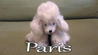 Webkinz Poodle Adoption