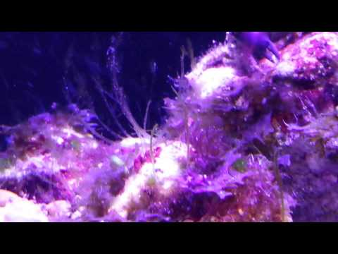 New crabs in IM Fusion 10 Tank